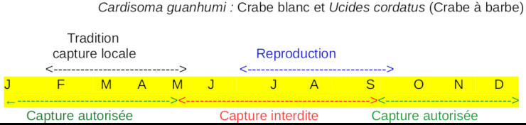 Cycle de reproduction et de capture des crabes